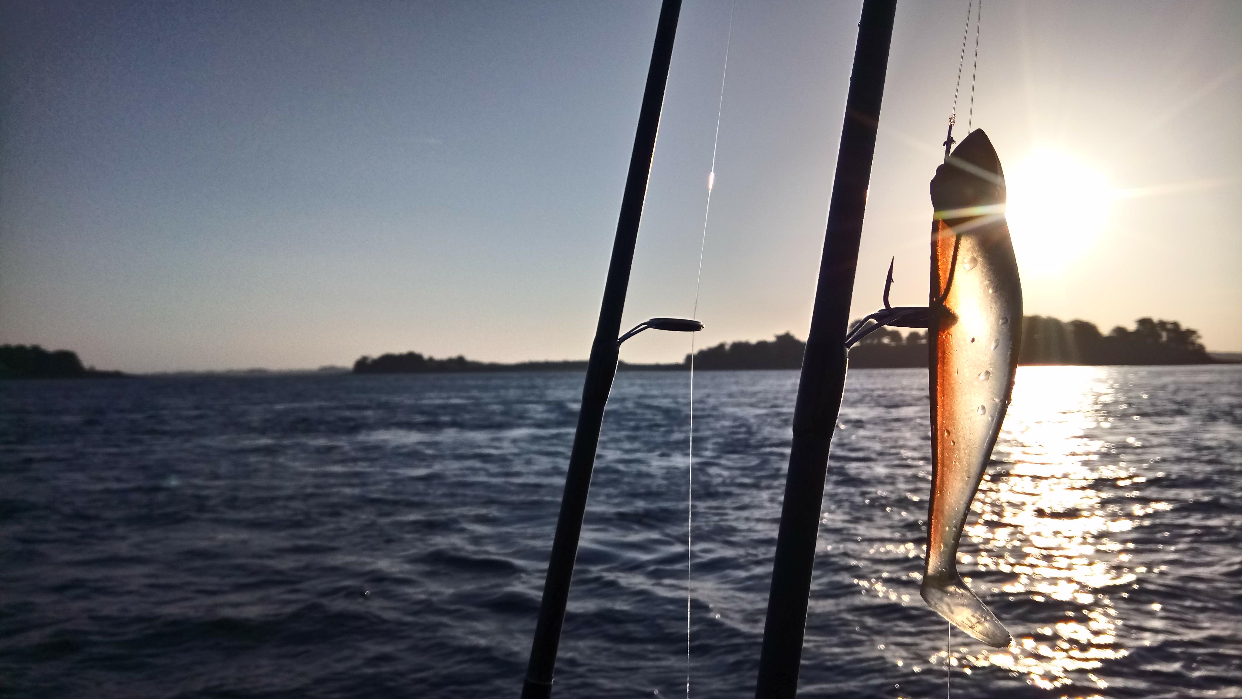 Mickaël RIO- Moniteur- Guide de pêche Golfe du Morbihan- Sortie pêche en mer en bateau au départ du port du Logeo à Sarzeau- Guide de pêche Morbihan- pêche au bar Morbihan- Sortie pêche en mer à Sarzeau, Presqu'îles de Rhuys, à 5mn d'Arzon et 20mn de Vannes