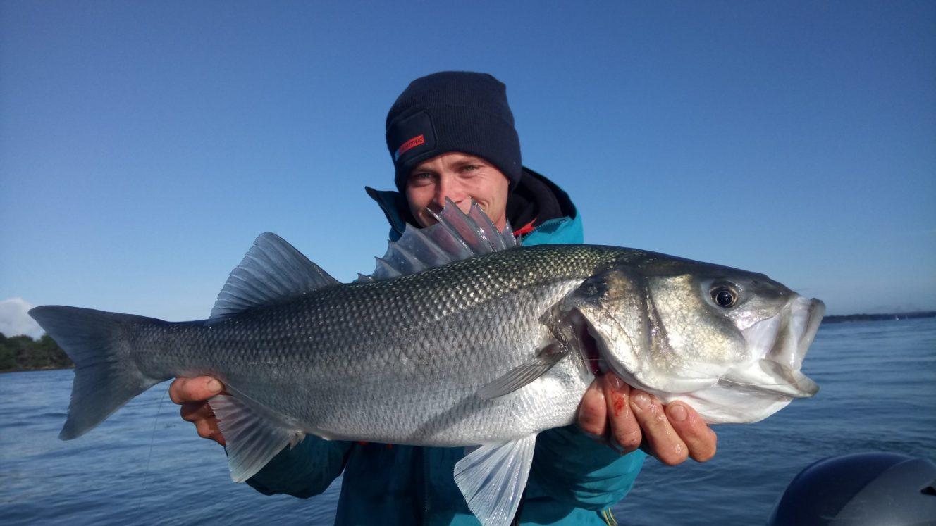 Guide pêche Morbihan - Gros bar du Golfe -